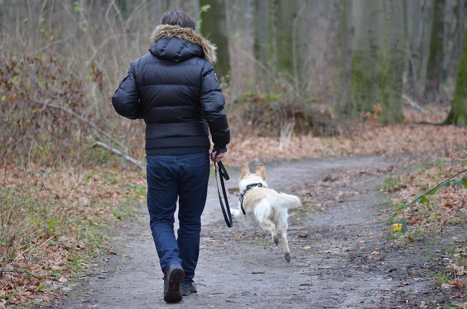 op vakantie met een hond